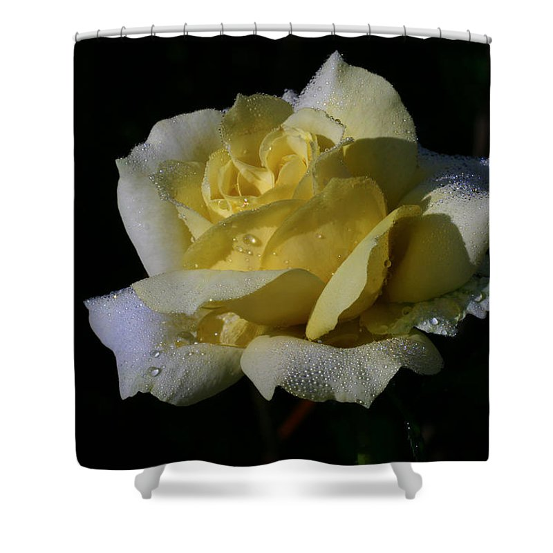 Rose Shower Curtain featuring the photograph Lemoncandy by Doug Norkum
