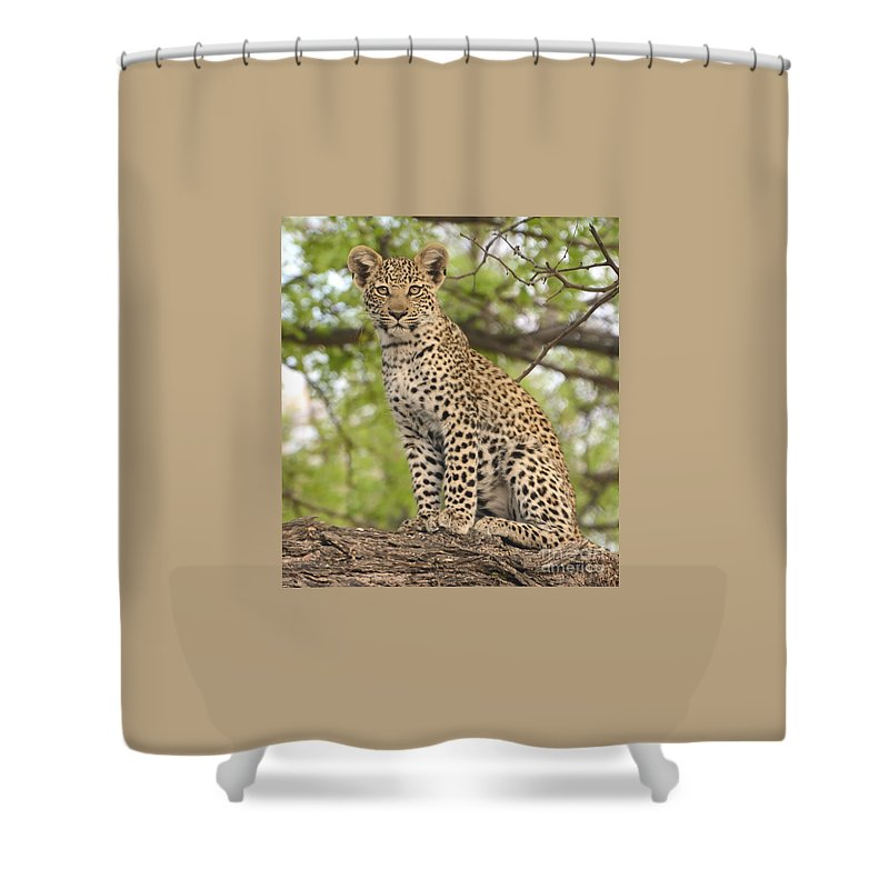 Young Shower Curtain featuring the photograph Leopard Cub Gaze by Tom Wurl