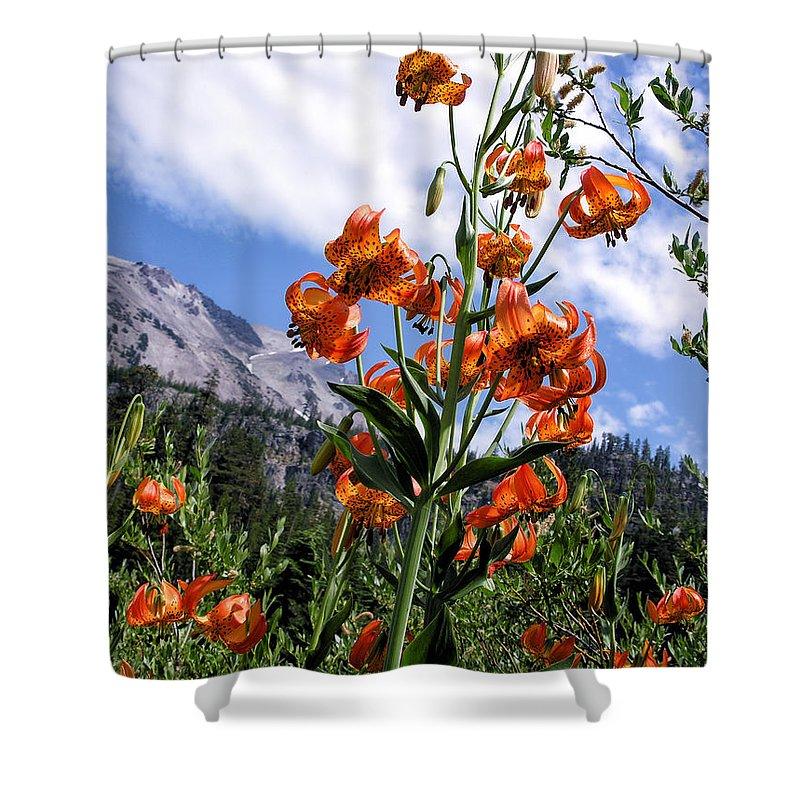 Mountain Scenery Shower Curtain featuring the photograph Leopard Lilies Below Lassen Peak by Kathleen Bishop