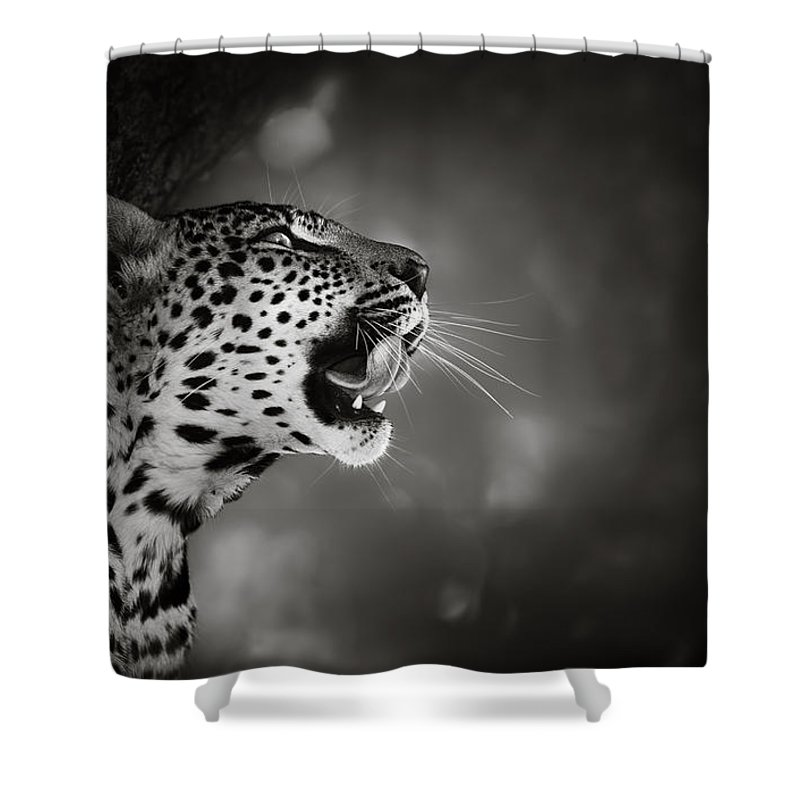 Leopard Shower Curtain featuring the photograph Leopard portrait by Johan Swanepoel