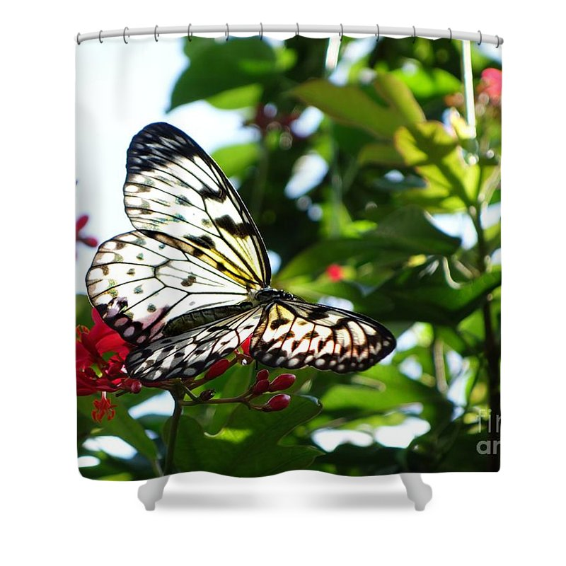Butterfly Flower Nature Green Shower Curtain featuring the photograph Light And Butterfly by Nora Martinez