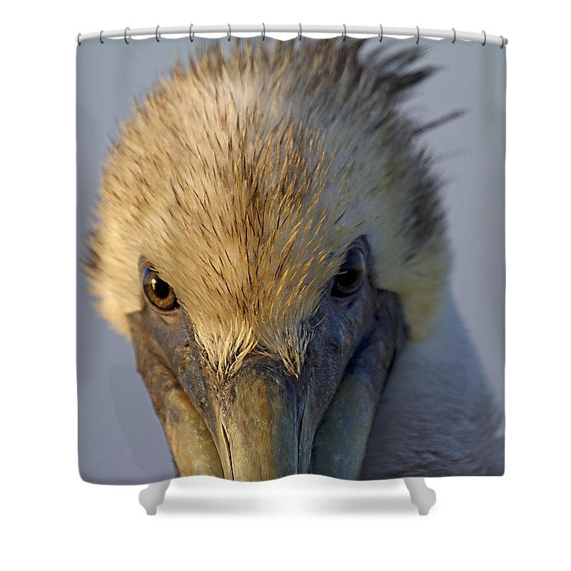 Brown Shower Curtain featuring the photograph Light And Dark by Betsy Knapp