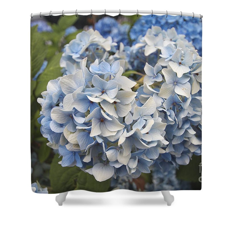 Flower Shower Curtain featuring the photograph Light Blue by William Norton