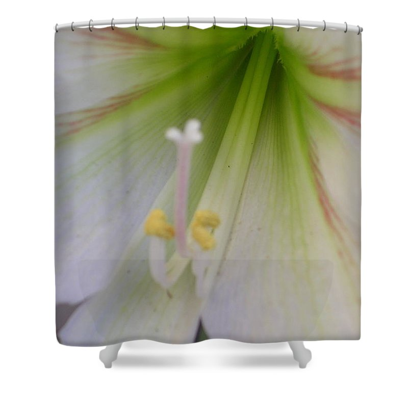 Shower Curtain featuring the photograph Lilly by Uma Swaminathan