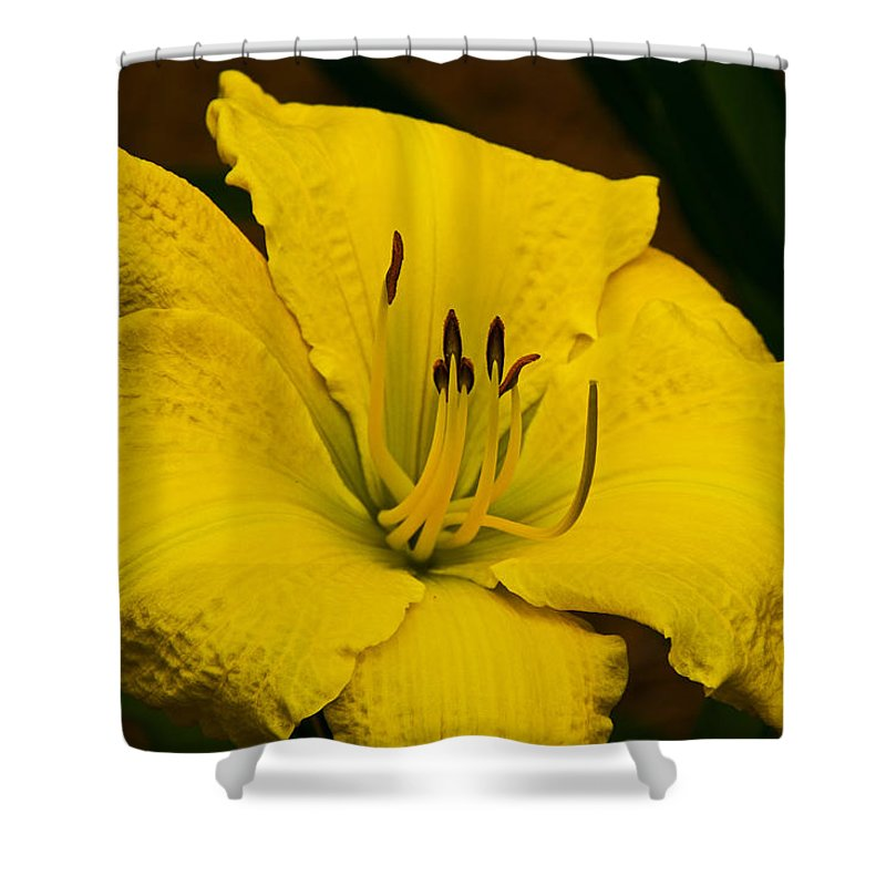 Lily Shower Curtain featuring the photograph Lily by David Campbell