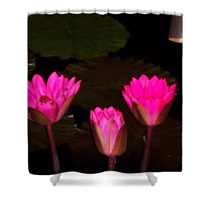 Water Lilies Shower Curtain featuring the photograph Lily Night Time by Eric Schiabor