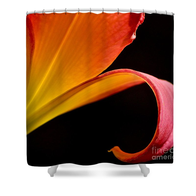 Lily Shower Curtain featuring the photograph Lily Of The Field by Chris Fleming