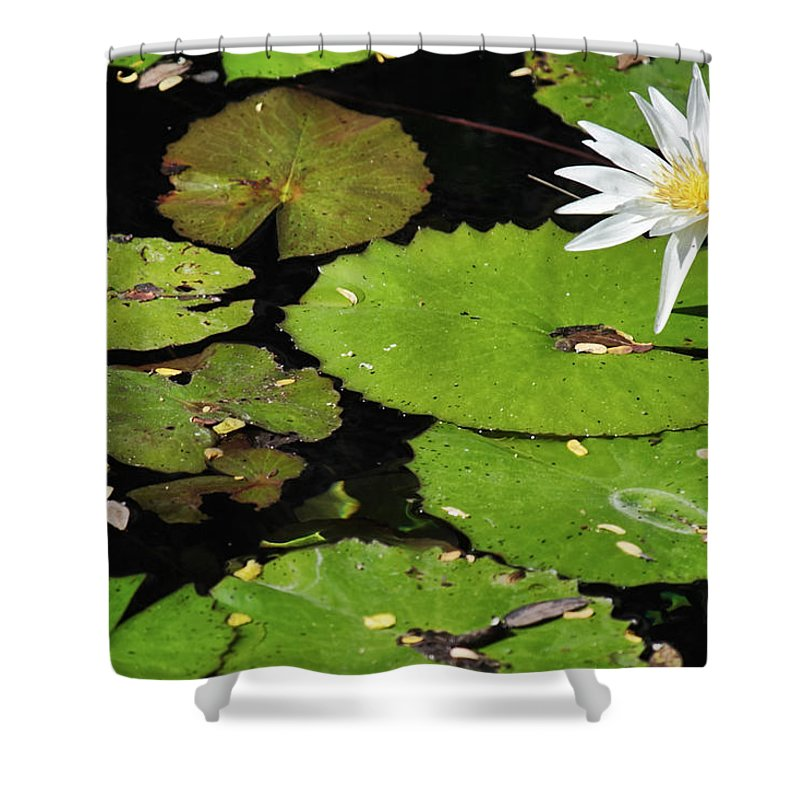 Lily Shower Curtain featuring the photograph Lily Pads And Lotus Flower by Jason Politte