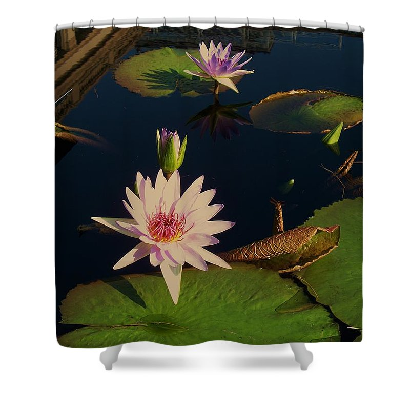 Photograph Shower Curtain featuring the photograph Lily White Monet by Eric Schiabor