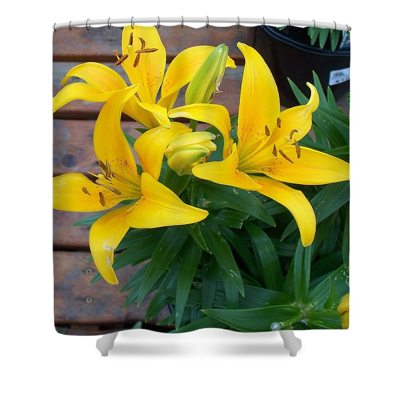 Photograph Shower Curtain featuring the photograph Lily Yellow Flower by Eric Schiabor