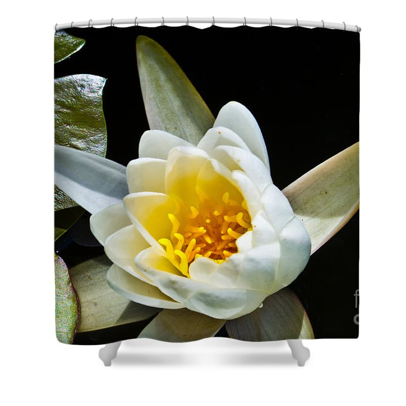 Lily Shower Curtain featuring the photograph Lilypad by Scott Hervieux