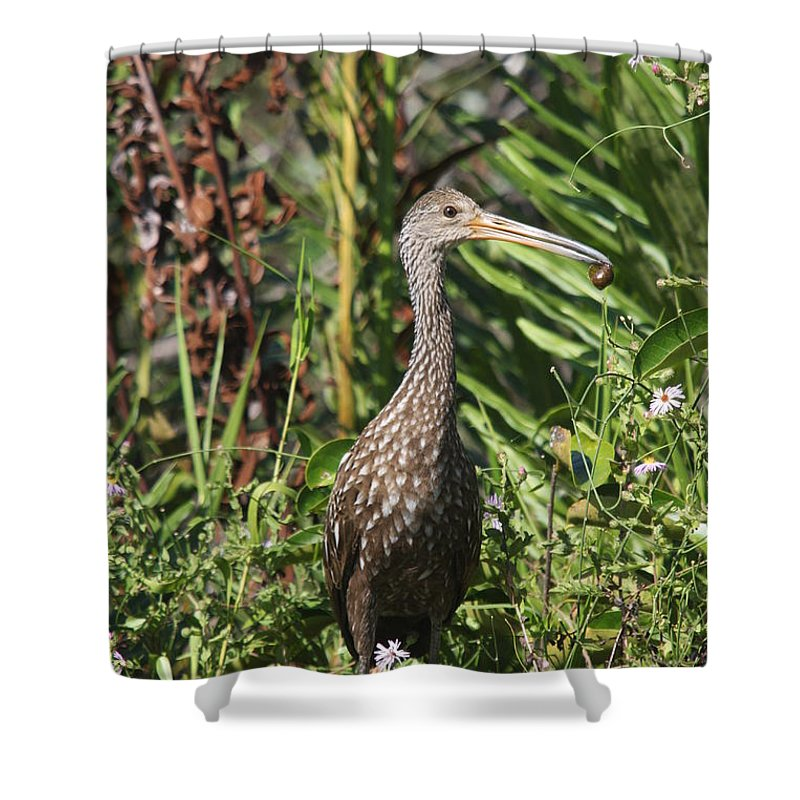 Limpkin Shower Curtain featuring the photograph Limpkin With An Apple Snail by Christiane Schulze Art And Photography