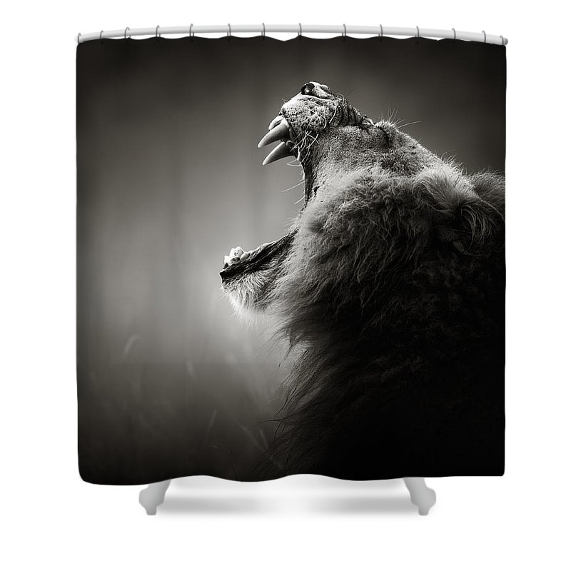 Lion Shower Curtain featuring the photograph Lion displaying dangerous teeth by Johan Swanepoel