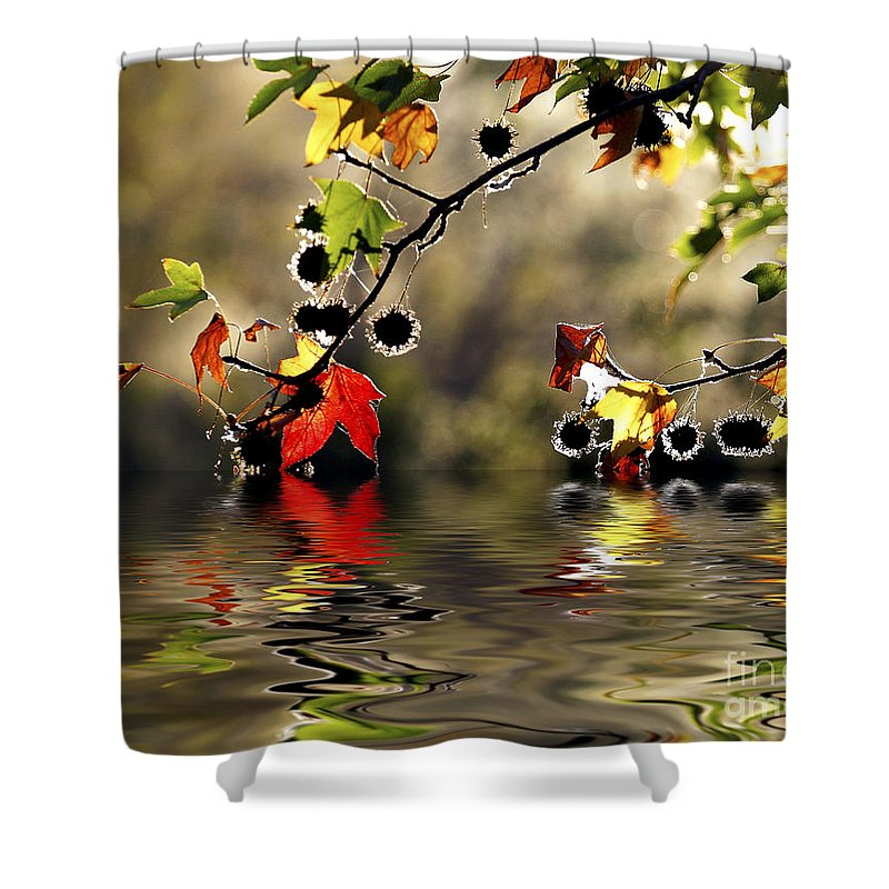 Liquidambar Maple Autumn Fall Flood Water Reflection Shower Curtain featuring the photograph Liquidambar In Flood by Sheila Smart Fine Art Photography