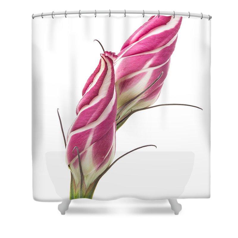 Lisianthus Shower Curtain featuring the photograph Lisianthus Love by Ann Garrett