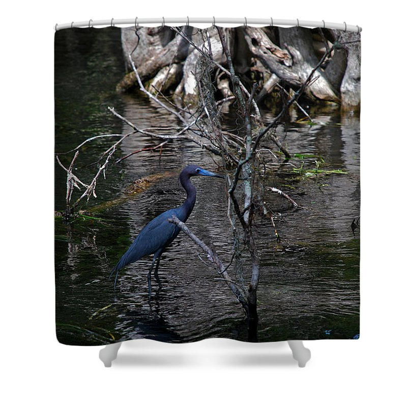 Heron Shower Curtain featuring the photograph Little Blue Heron by Skip Willits