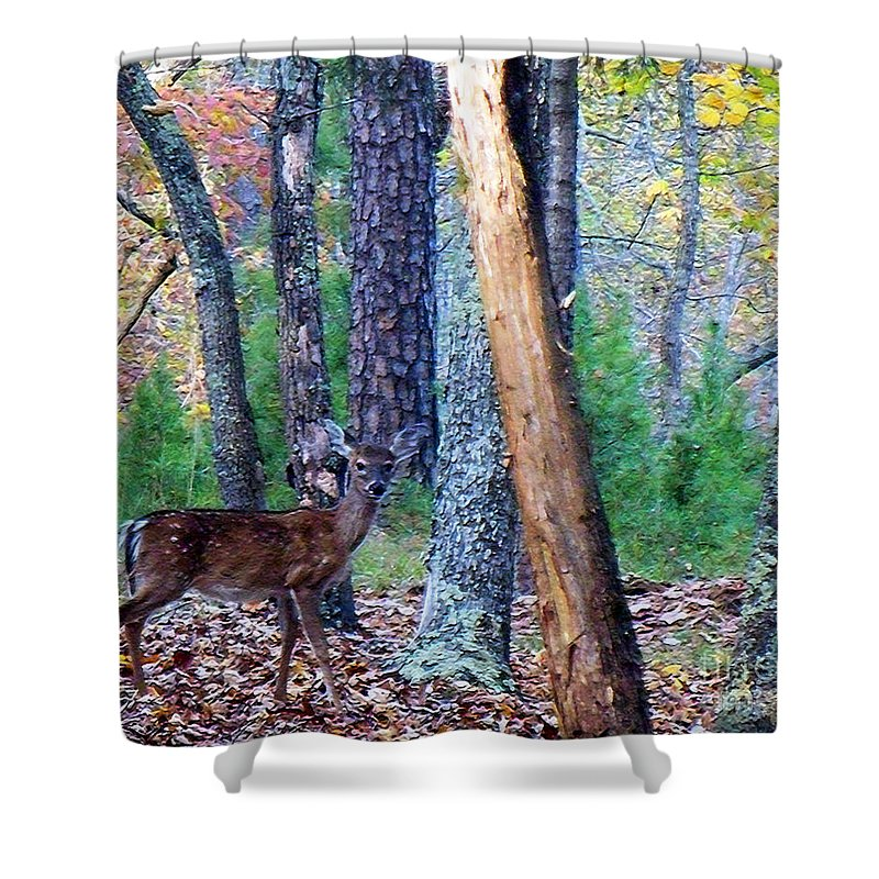Deer Shower Curtain featuring the photograph Little Deer In Autumn by Lydia Holly