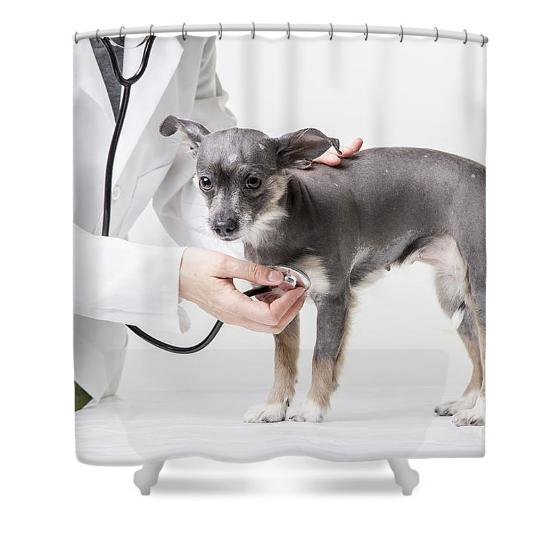 Dog Shower Curtain featuring the photograph Little Dog At The Vet by Edward Fielding