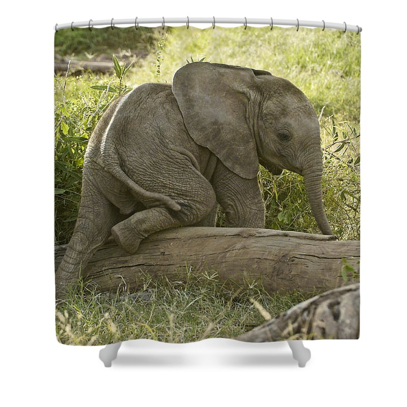 Africa Shower Curtain featuring the photograph Little Elephant Big Log by Michele Burgess