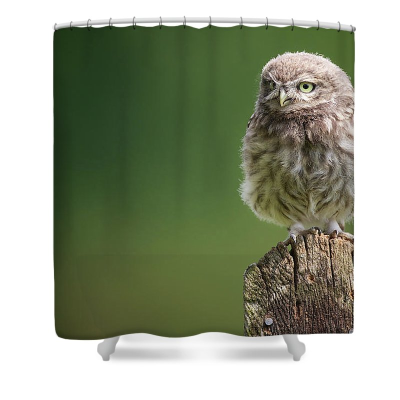 Owlet Shower Curtain featuring the photograph Little Fuzzy by Markbridger