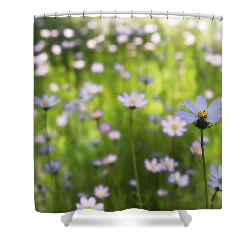 Pink Daisies Shower Curtain featuring the photograph Little Pink Daisies by Saija Lehtonen