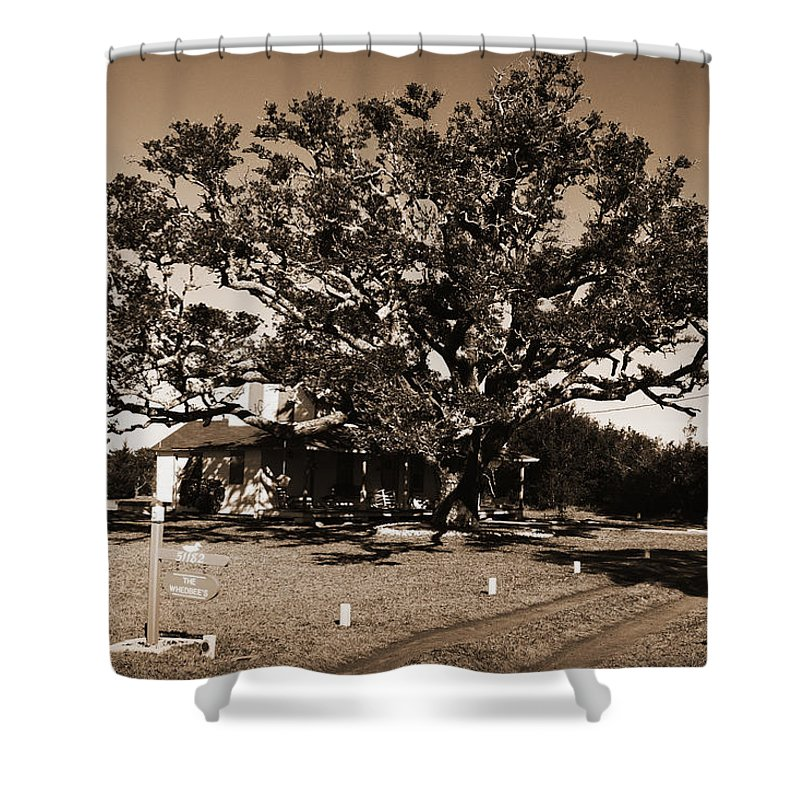 Live Oak Shower Curtain featuring the photograph Live Oak Outer Banks by Greg Kluempers