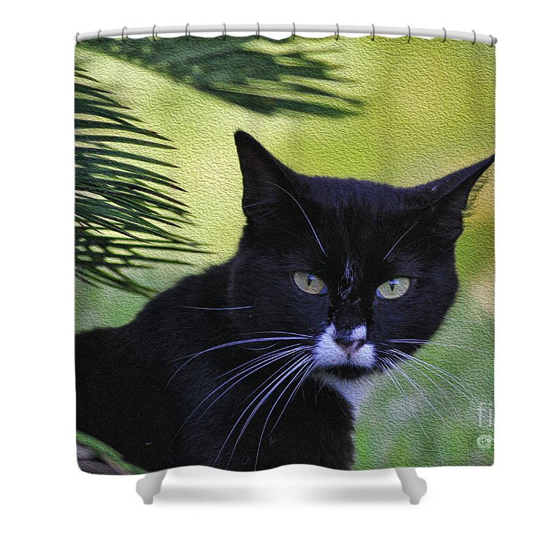Cat Shower Curtain featuring the photograph Living The Wild Life by Deborah Benoit
