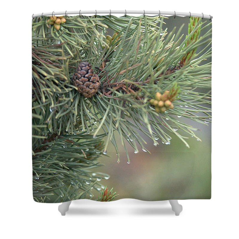 Pine Shower Curtain featuring the photograph Lodge Pole Pine in the Fog by Frank Madia