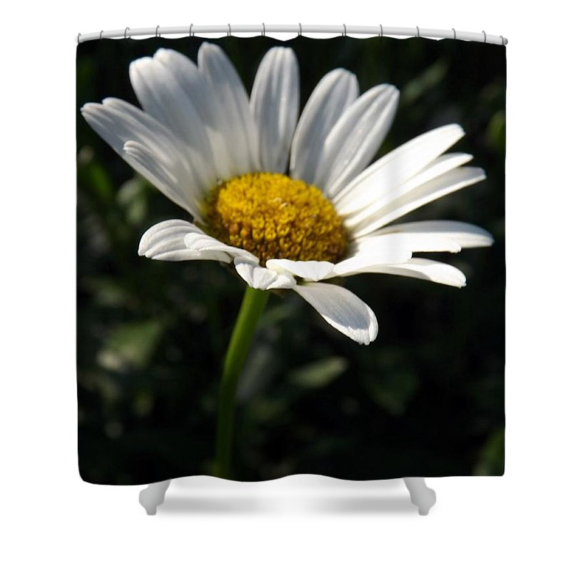 Flower Shower Curtain featuring the photograph Lone Daisy by Sara Raber