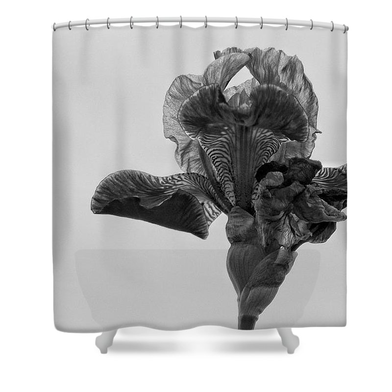 Iris Shower Curtain featuring the photograph Lone Iris Black And White by Ron White
