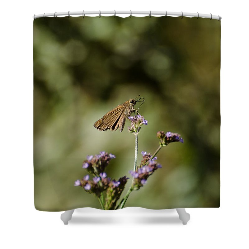 Insect Shower Curtain featuring the photograph Long-winged Skipper Butterfly by Donna Brown