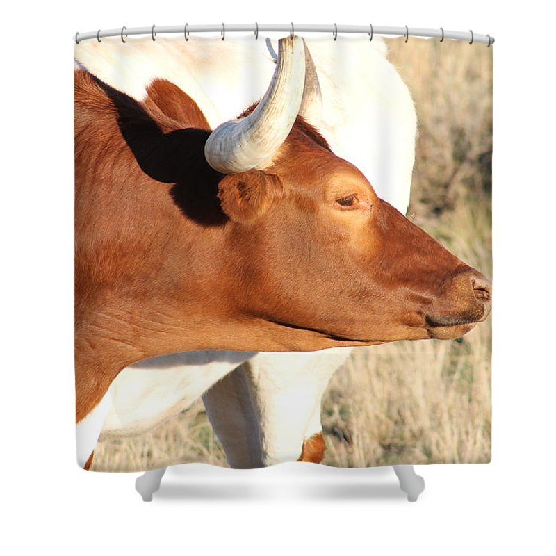 Longhorns Shower Curtain featuring the photograph Longhorn #7 by G Berry
