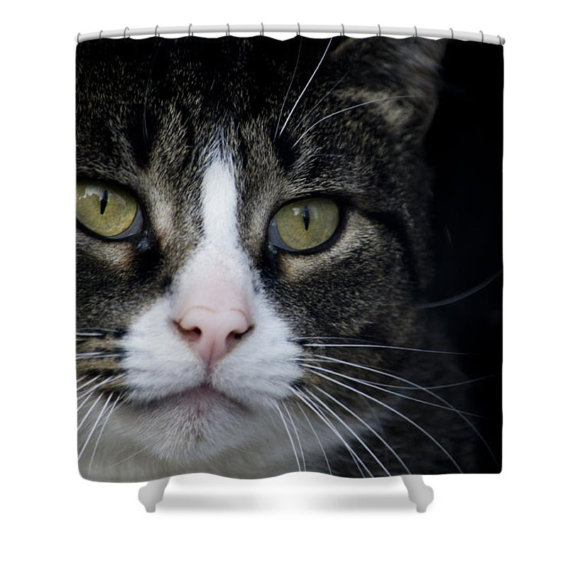 Eyes Shower Curtain featuring the photograph Look At Me by Jatinkumar Thakkar