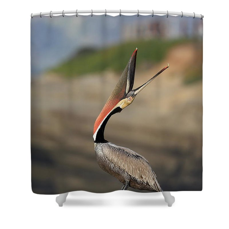 Pelican Shower Curtain featuring the photograph Look At That by Bryan Keil