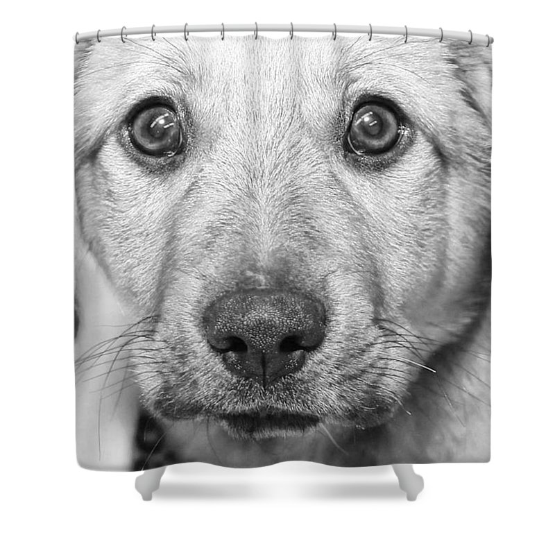 Puppy Shower Curtain featuring the photograph Look Deep Into My Eyes by Joyce Baldassarre