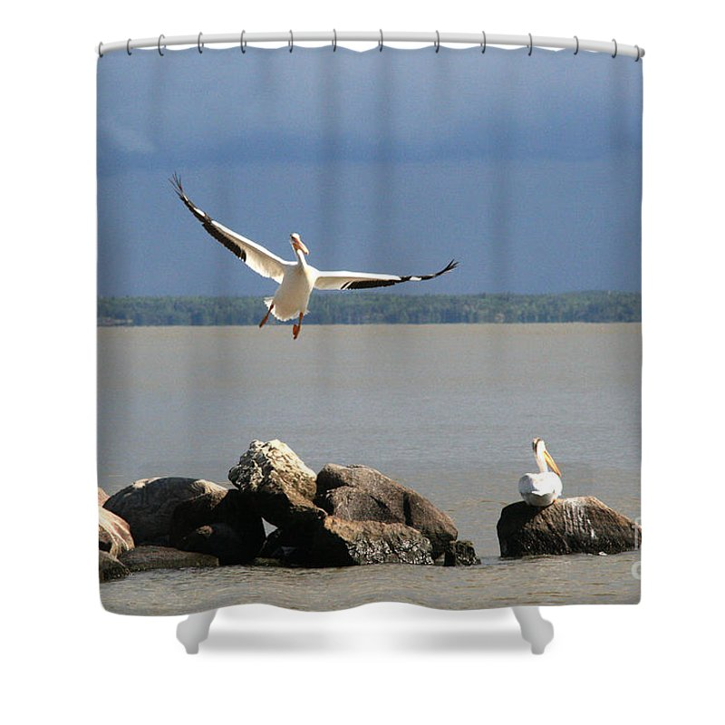 Nature Shower Curtain featuring the photograph Look Ma - I Can Fly by Mary Mikawoz