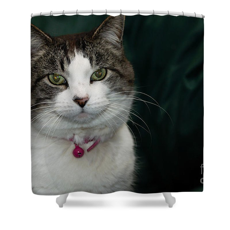 Animal Shower Curtain featuring the photograph Looking At You Looking At Me by Jennifer White