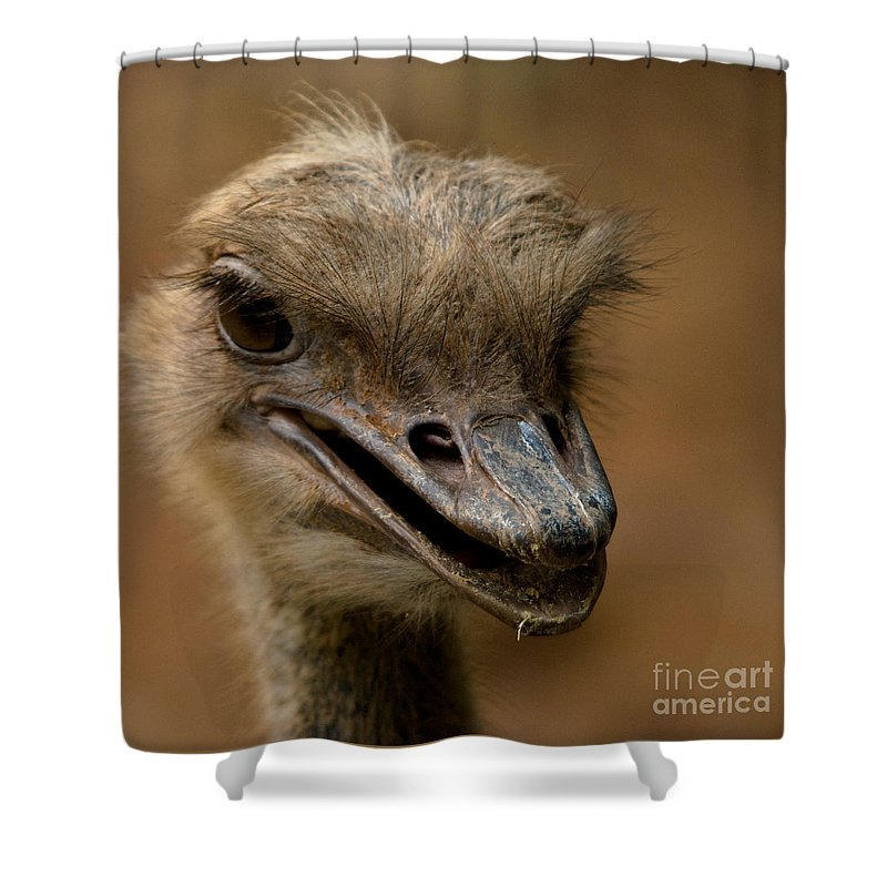 Photography Shower Curtain featuring the photograph Looking For Trouble by Venetta Archer
