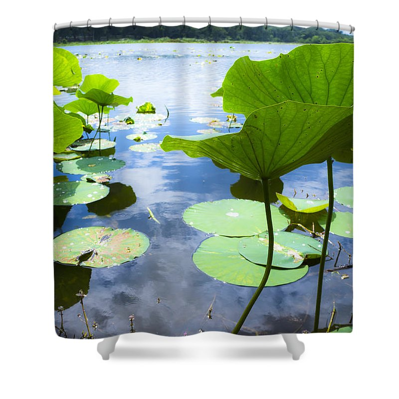 Reflection Color Shower Curtain featuring the photograph Looking Toward The Sun by Ellie Teramoto