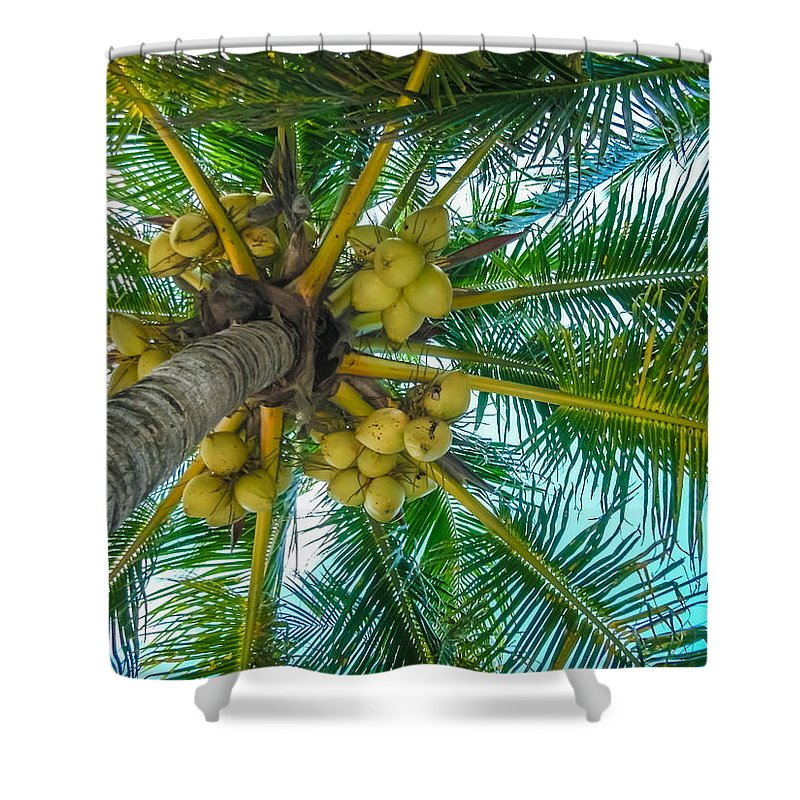 Coconut Shower Curtain featuring the photograph Looking Up A Coconut Tree by Ray Sheley