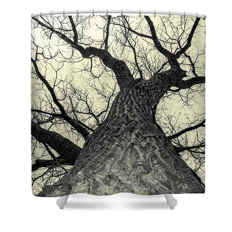 Cottonwood Shower Curtain featuring the photograph Looking Up by Chad Rowe