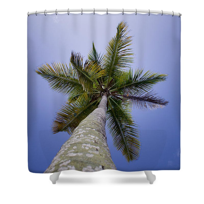 Antigua And Barbuda Shower Curtain featuring the photograph Looking Up by Ferry Zievinger