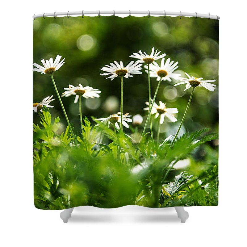 Flower Shower Curtain featuring the photograph Looking Up by Yew Kwang