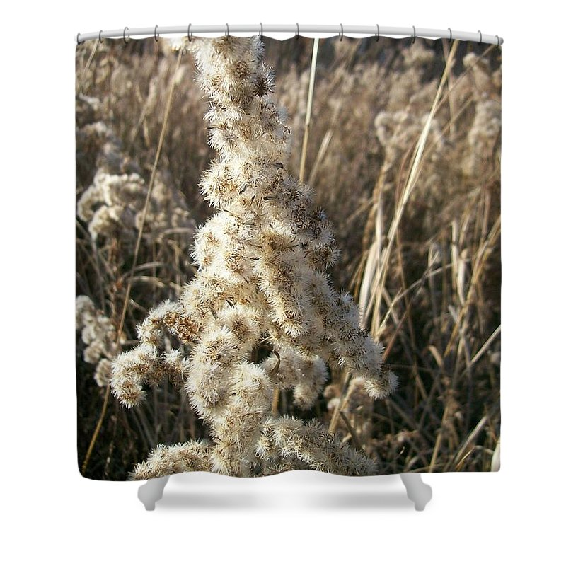 Weed Shower Curtain featuring the photograph Looks Like Cotton by Sara Raber