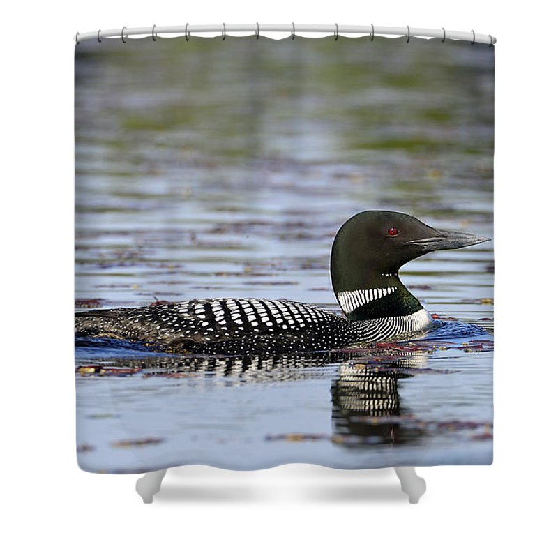 Algonquin Shower Curtain featuring the photograph Loon And Reflection by Claudio Bacinello