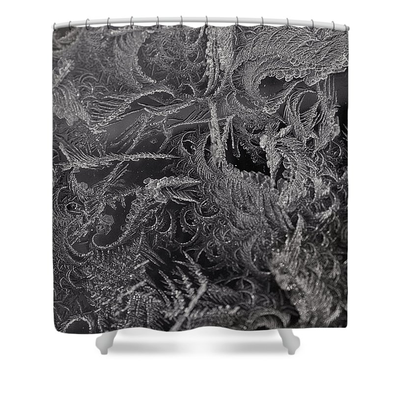 Frost Shower Curtain featuring the photograph Lost In The Frost by Susan Capuano
