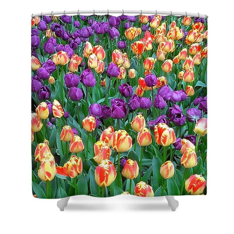 Purple Shower Curtain featuring the photograph Lots Of Tulips by Catie Canetti