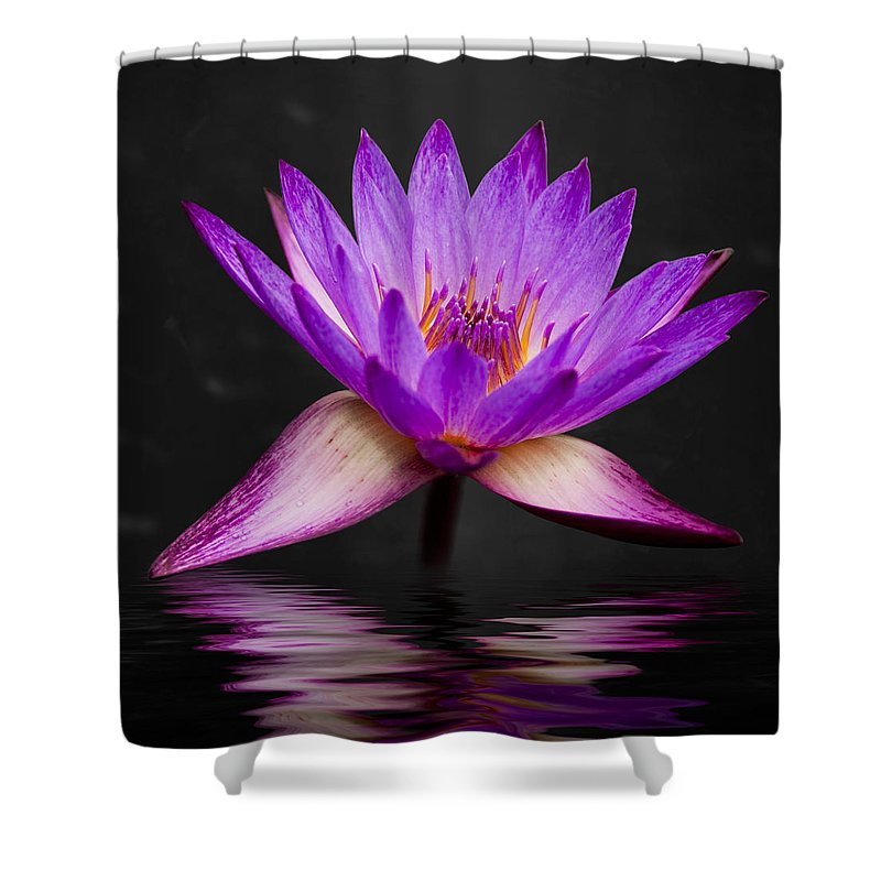 3scape Shower Curtain featuring the photograph Lotus by Adam Romanowicz