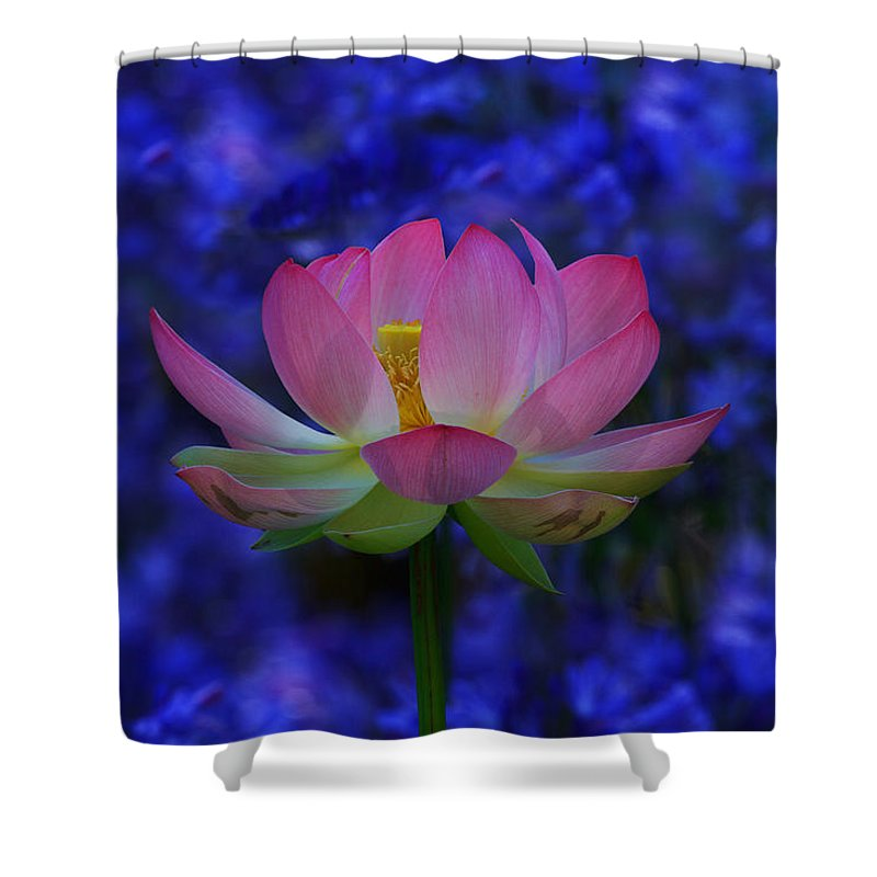 California Shower Curtain featuring the photograph Lotus Flower In Blue by Beth Sargent
