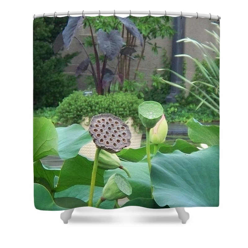 Water Lilies Shower Curtain featuring the photograph Lotus Flower In Lily Pond by Eric Schiabor